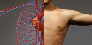 regeneracija tijela