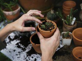 Trik uz koji ćete uspješno uzgajiti svaku biljku