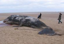 Bušenje Jadrana: Istraživanje pogubno za život u moru